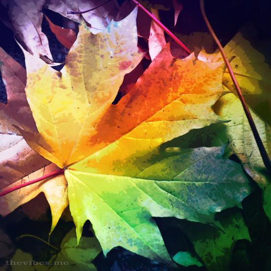 Autumn Leaf by Mark Wallis