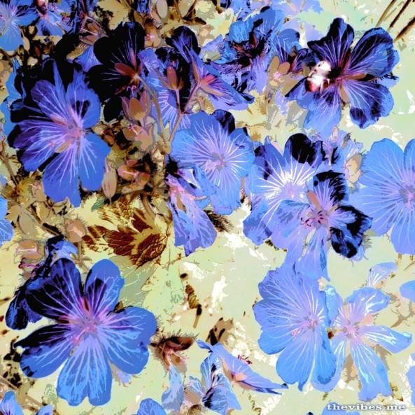 Flowers on Chorlton Allotment by Mark Wallis